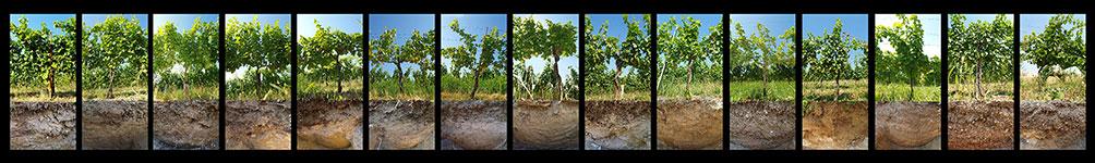 Weingarten Erde Rebsorten
