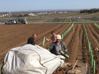 """Unsere TOP Lage """"Schwaben"""" in Gumpoldskirchen wird mit den Sorten Rotgipfler, Zierfandler, Chardonnay und Pinot Noir neu ausgepflanzt"""