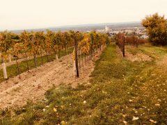 Eichkogel mit unseren Weingartenhütten 24.Oktober 2018