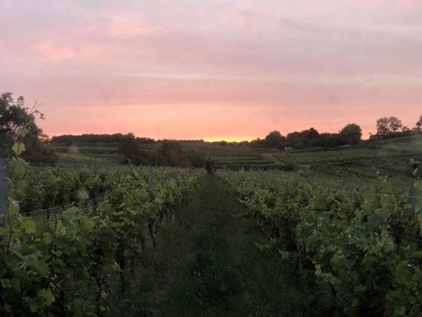 Obstgarten 18.06.2019
