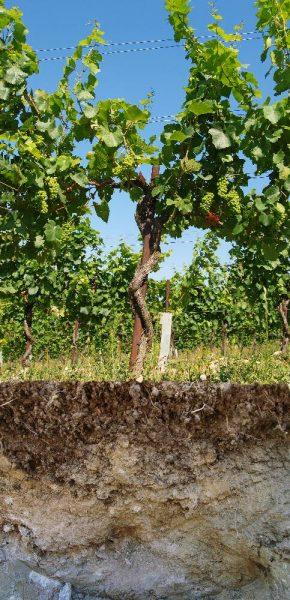 Eichkogel Tor Pinot Noir dicht