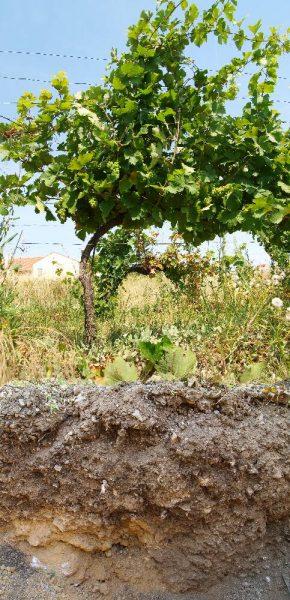 Mandlerin Rotgipfler alt